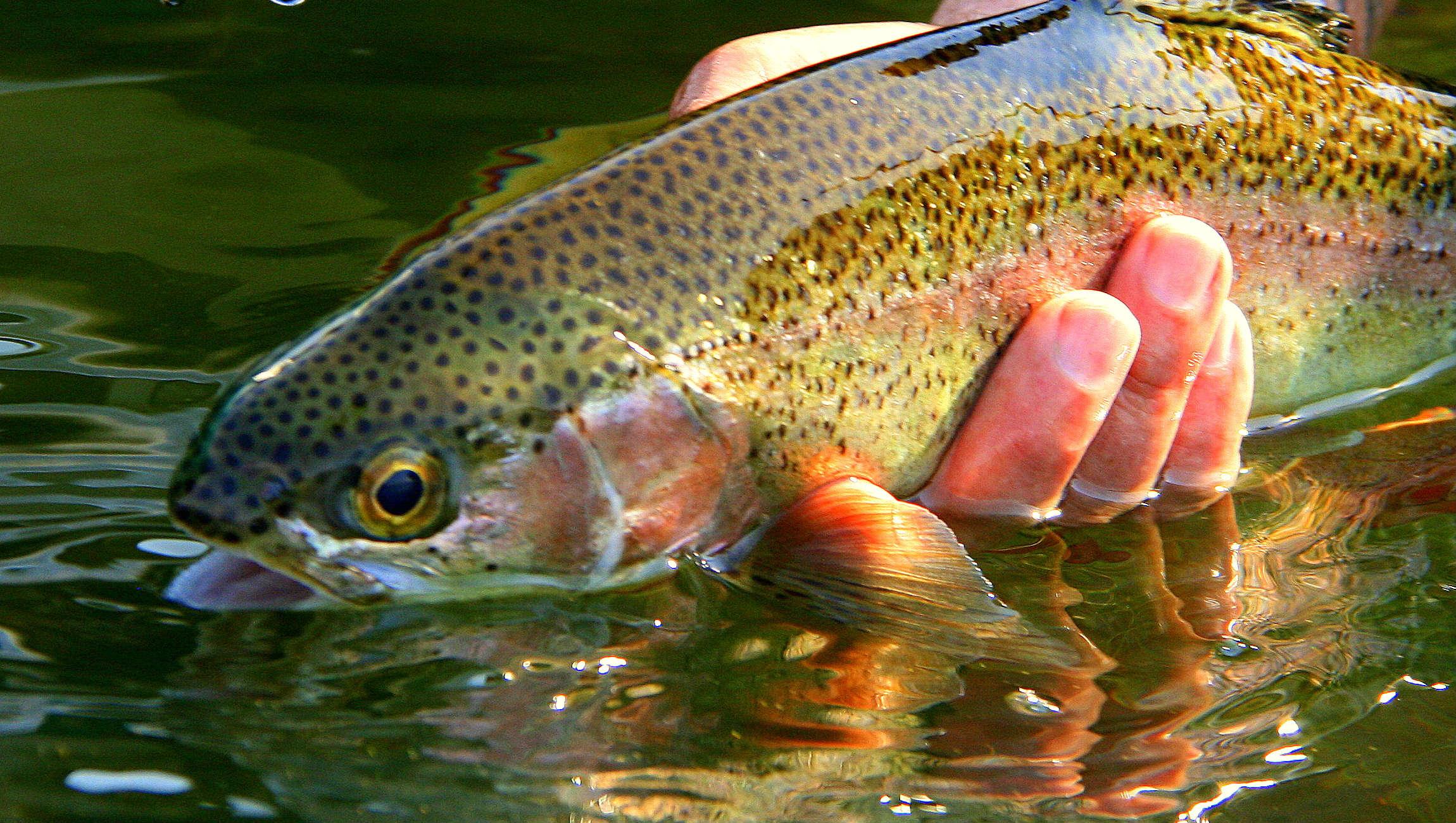fishing Krugersdorp  - Gaudeng 01 (2)